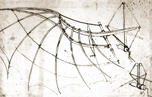 Structure of Wing